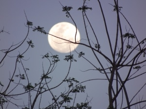 1345824_trees_and_moon_1