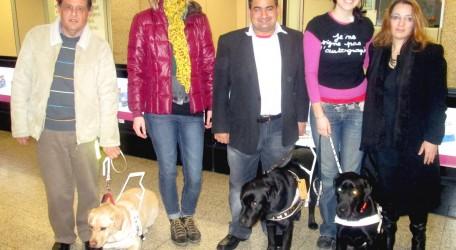 MGDF Bratislava guide dogs