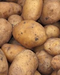 1399901_potato_texture