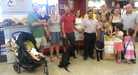 Arrival of 3 guide dog puppiees 31082014