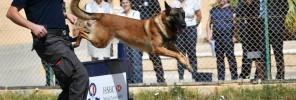 61 - HSBC Police Dog IMG2