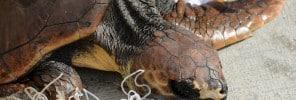 07 - Nature Trust - turtles