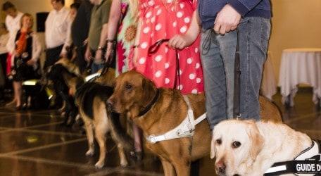 Dog Reception line-1